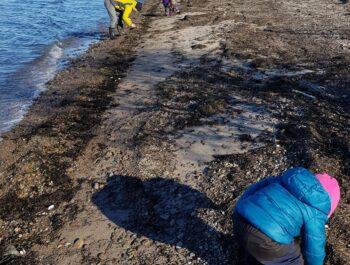'Årets strandstädningstävling är nu igång' bild