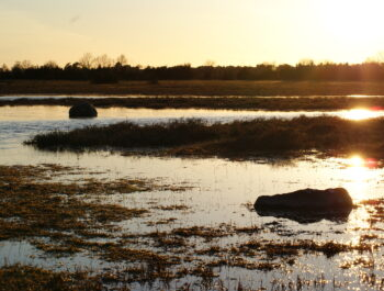 'Uppföljning våtmarksåtgärder i Harfjärden och Triangeln' bild
